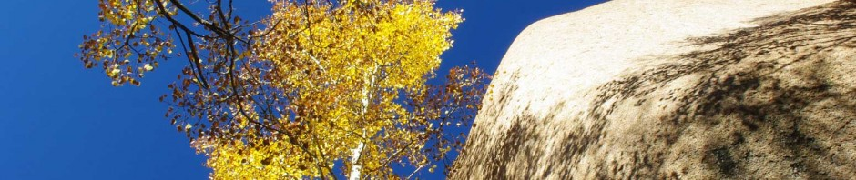 Aspens in October - Pike National Forest